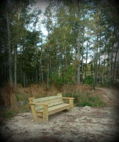 1 of 11 Benches Within Trail