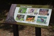Animal Tracks Information